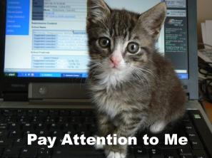 kitten on the keyboard.jpg