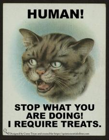 cat hungry.jpg