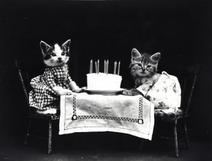 cats-dressed-vintage-photo.jpg